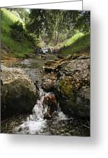 Donner Creek Greeting Card
