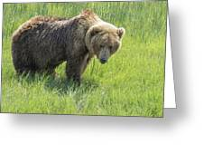 Don't Mess With Mama Bear Greeting Card