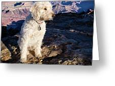 Doodle On Grand Canyon Rim Greeting Card