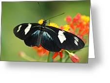 Doris Butterfly Greeting Card