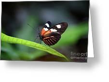 Doris Longwing Butterfly 2017 Greeting Card