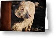 Dorset Ewe Greeting Card
