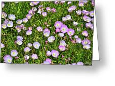 Dotted Meadow Greeting Card