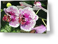 Double Beauty Greeting Card