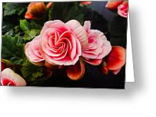 Double Begonia Greeting Card