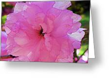 Double Bloom Greeting Card