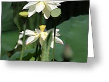 Double Blossom Greeting Card