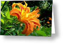Double Blossom Orange Lily Greeting Card