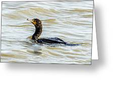 Double-breasted Cormorant Greeting Card