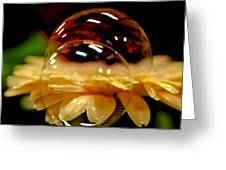 Double Bubble Flower Greeting Card