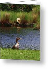 Double-crested Cormorant 2q Greeting Card