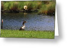 Double-crested Cormorant 3 Greeting Card