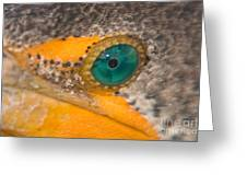 Double-crested Cormorant's Emerald Eye Greeting Card