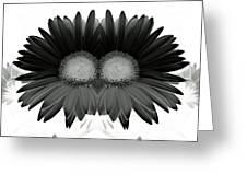 Double Daisy Noir Greeting Card