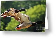 Double Green Heads In Flight Greeting Card