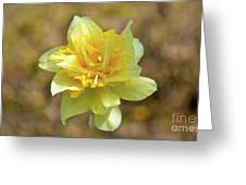 Double Headed Daffodil Greeting Card