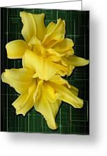 Double Jackpot Daylilies Greeting Card
