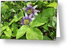 Double Passion Flowers Greeting Card