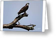 Double Perches Greeting Card