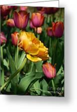 Double Petal Yellow Tulip Greeting Card