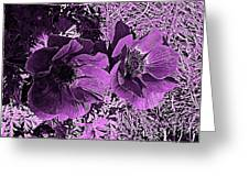 Double Poppies In Purple Greeting Card