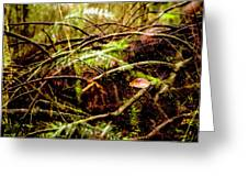 Double Rainforest Greeting Card