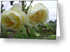 Double Rainy Rose Greeting Card