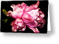 Double Tulip Greeting Card