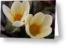 Double Vision Greeting Card by Steven Milner
