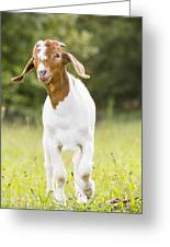 Dougie The Goat Greeting Card