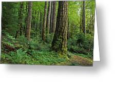 Douglas-fir Greeting Card
