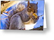 Douglas Squirrel Eating Greeting Card