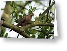 Dove Bar Greeting Card