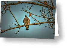 Dove #g2 Greeting Card