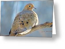 Dove In Evening Light Greeting Card by Lori Frisch