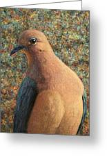 Dove Greeting Card by James W Johnson
