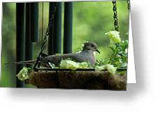 Dove Nesting, Balcony Garden, Hunter Hill, Hagerstown, Maryland, Greeting Card