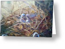 Dove Nesting Greeting Card