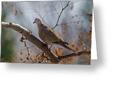 Dove On A Branch Greeting Card