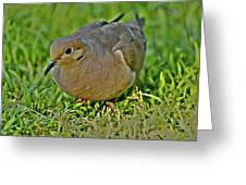 Dove With Hdr Greeting Card