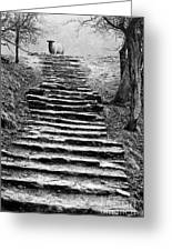 Dovedale Steps Greeting Card