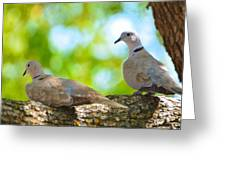 Doves In A Tree Greeting Card
