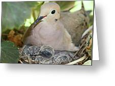 Doves In Planter Greeting Card