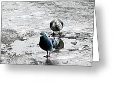 Doves On The Street Greeting Card