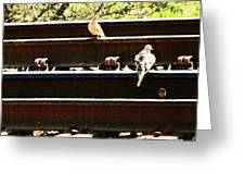 Doves On The Tracks Greeting Card