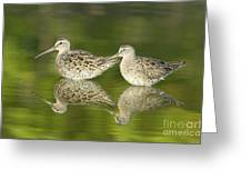 Dowitcher Reflections Greeting Card