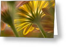 Down Among The Daisys Greeting Card