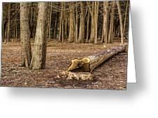 Down Tree Greeting Card
