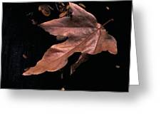 Downed Sycamore Leaf Greeting Card