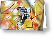 Downy Woodpecker In Autumn Forest Greeting Card